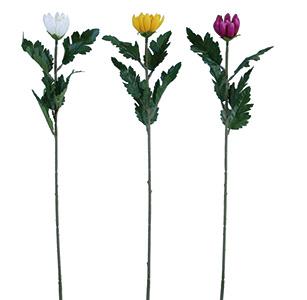 新明日香菊