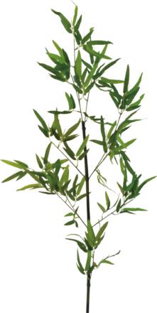 竹笹150